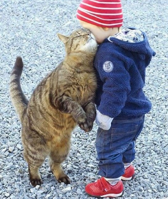 6-91652-cat-and-baby-nuzzle-1422924856